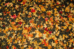 Leaves covered the ground Stock Photography