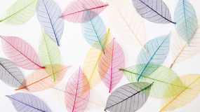 Leaves background in pretty pastel colors