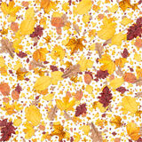 Leaves background (on white) Royalty Free Stock Photo