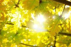 Leaves Backlight Stock Photo