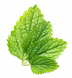 Leaves of balm Royalty Free Stock Images