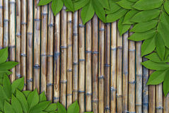Leaves on  bamboo background, Leaves frame Royalty Free Stock Photos