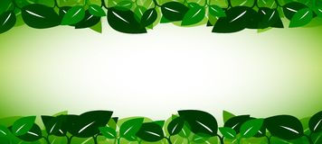 Leaves Banner Stock Photo