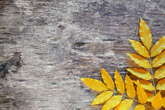 Leaves Banner Royalty Free Stock Photo