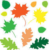 Leaves_basic Fotos de Stock Royalty Free