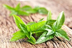 Leaves of basil Stock Photo