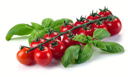Leaves of basil and tomatoes Stock Photography