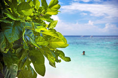 Leaves and Beach Royalty Free Stock Image