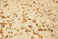Leaves on the beach. Brown leaves on the beach Royalty Free Stock Image