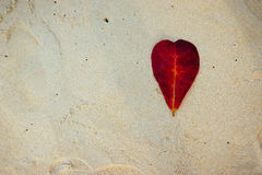 Leaves on the beach. Red, heart-shaped leaves on the beach,koh kood Thailand Royalty Free Stock Photography