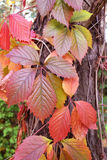 Leaves of the beautiful. Autumn stock images