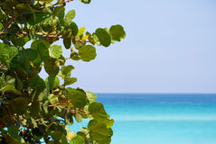 Leaves and a beautiful beach. With copy space in the right Royalty Free Stock Images