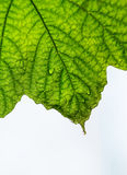 The leaves Royalty Free Stock Photography