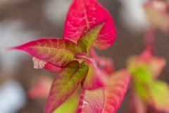 Leaves of a beautiful South American plant stock photos