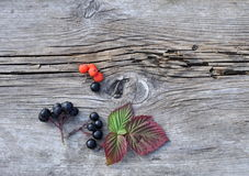 Leaves and Berries on Old Board Royalty Free Stock Image