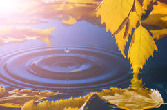Leaves of birch over the water with ripples from the raindrops Stock Images