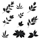 Leaves, black silhouettes Royalty Free Stock Photography