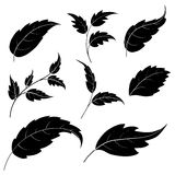 Leaves, black silhouettes. Set of leaves of plants and trees, black silhouettes on white background Stock Images