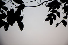 Leaves black silhouettes on gray background. Branches silhouette Stock Photography