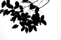 Leaves black silhouettes on white background Stock Photography