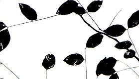 Leaves black silhouettes on white background Royalty Free Stock Images