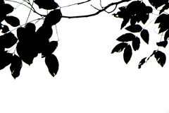 Leaves black silhouettes on white background Royalty Free Stock Image