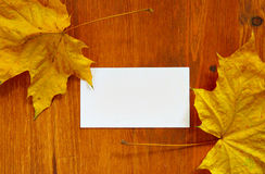 Leaves and blank card Stock Photos