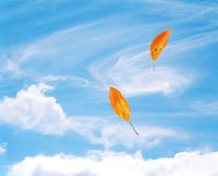 Leaves Blowing in the Wind Stock Photography