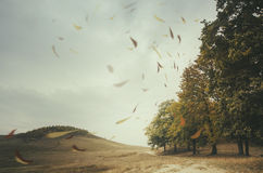 Leaves blown by wind in autumn Royalty Free Stock Image