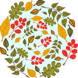 Leaves on a blue background. Autumn leaves on a light blue background Royalty Free Stock Photography