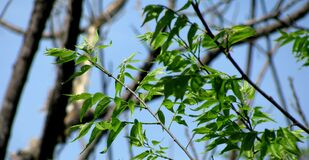 Leaves and Blue Skies Royalty Free Stock Photography