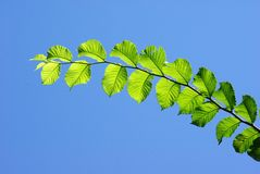 Leaves with blue sky Stock Image