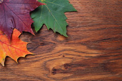Leaves on the board Stock Image