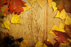 Leaves on a board Royalty Free Stock Photo