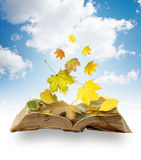 Leaves on book Royalty Free Stock Image