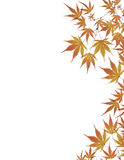Leaves border isolated on white background. Colorful border composed of multiple autumn leaves Stock Photos