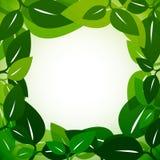 Leaves Border Stock Image