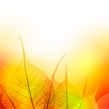 Leaves  Border of  Autumn color season on white background Royalty Free Stock Photo