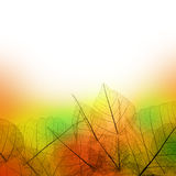 Leaves  Border of  Autumn season on white background Royalty Free Stock Images