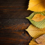 Leaves border on dark wood Stock Photos
