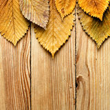 Leaves border on wood Stock Photo
