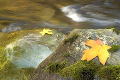 Leaves on boulders Royalty Free Stock Image
