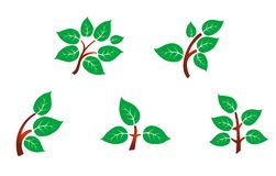 Leaves on branch royalty free stock images