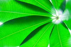 Leaves. Branch with fresh green leaves Stock Photo