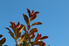 Leaves on a branch. Green leaves on a branch on a blue background Stock Images