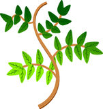 Leaves, Branch, Leaf, Green, Plant Royalty Free Stock Images