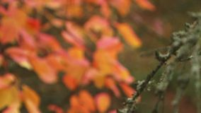 Leaves stock video footage