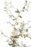 Leaves and branches Royalty Free Stock Photography