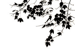 Leaves and Branches. Image taken of leaves during the fall of the year and made into an illustration stock illustration