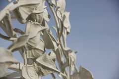 The leaves on the branches. Against the sky Stock Image